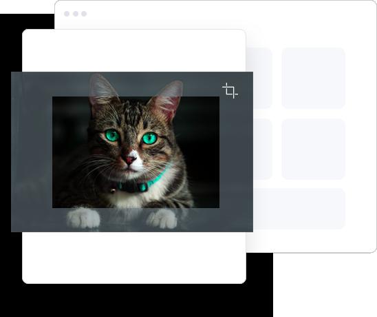 instagram-photo-editor-crop-the-cat